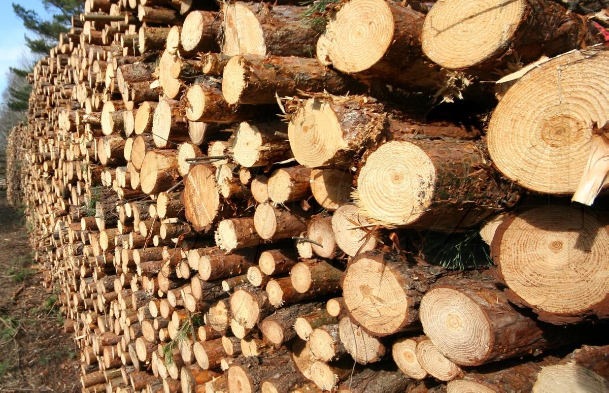 Kein Holzverkauf Geplant Hoyte24 Ihr Nachrichtenportal Für